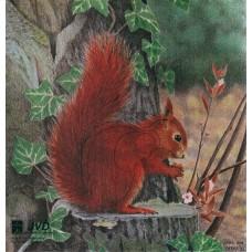 JVD Eichhörnchen