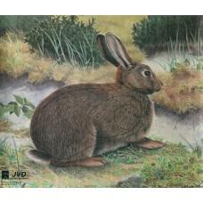 JVD Kaninchen